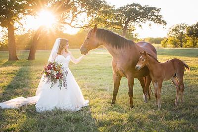 horsesandcamels006