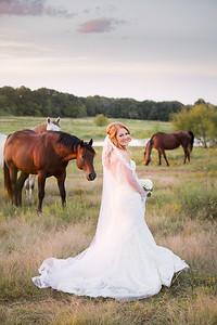horsesandcamels026