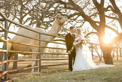horsesandcamels018