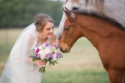 horsesandcamels017