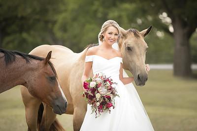 horsesandcamels009