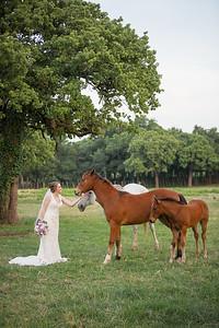 horsesandcamels016