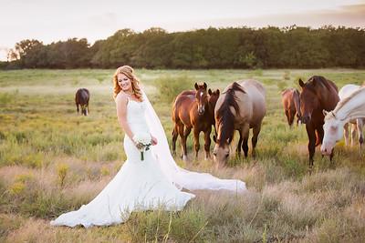 horsesandcamels023