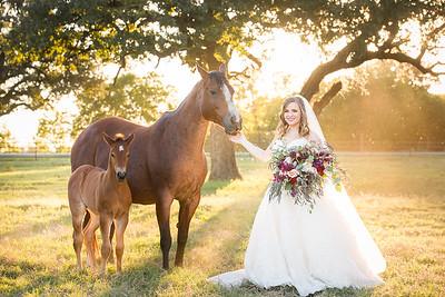 horsesandcamels005