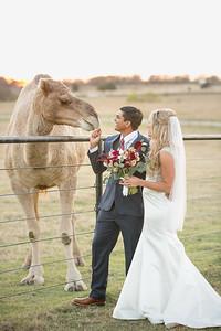 horsesandcamels001