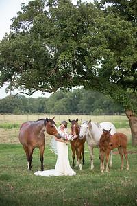 horsesandcamels014