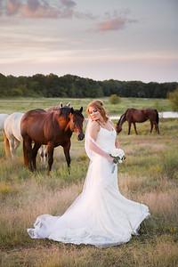 horsesandcamels028