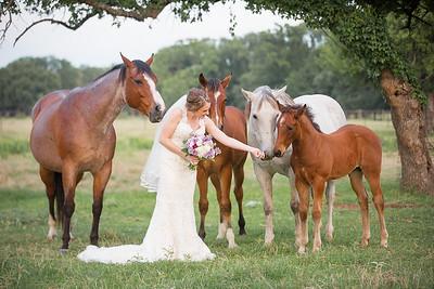 horsesandcamels015