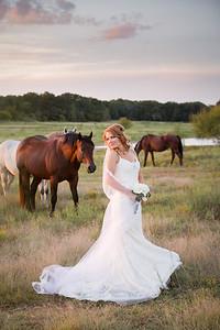 horsesandcamels027