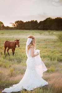 horsesandcamels024