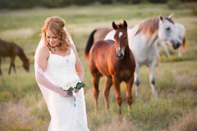 horsesandcamels029