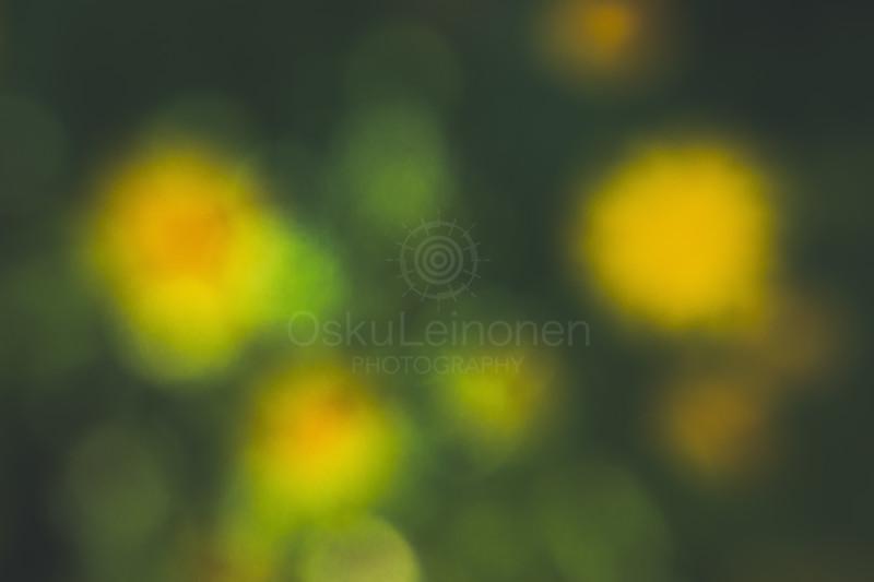 Abstract Flowers XXIII (Softly Yellow)