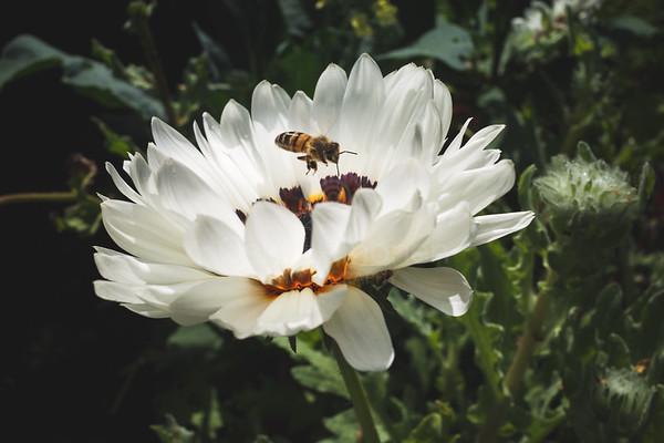 Flower Coloured Like Butterfly III