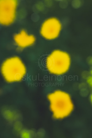 Abstract Flowers XXIV (Yellow Flowers)