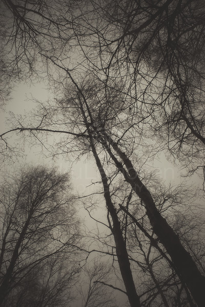 Bog XII (Trees)