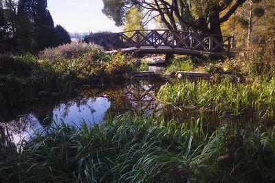 Abundance VI (Bridge)