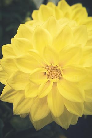 Bright Yellow Flower