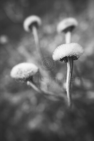 Twelve Bokeh Flowers VIII