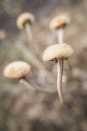 Twelve Bokeh Flowers V