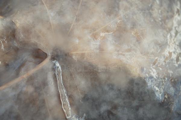 Frozen Water II (Leaf)