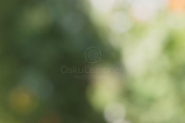 Abstract Flowers X (Yin Yang)