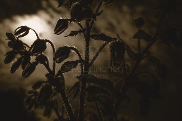 Nibbling Flowers