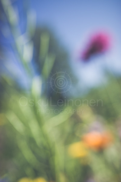 Abstract Flowers VII (Lean)