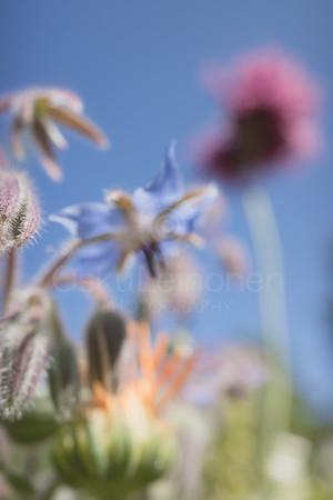 Abstract Flowers XVIII (Star)