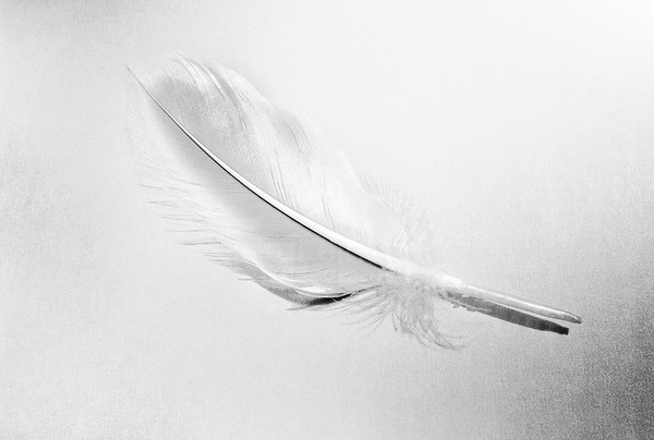 Light Touch (Feather)