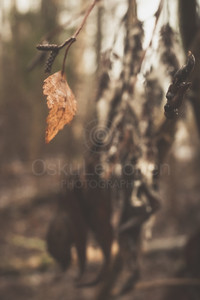 Bog VI (Dry Leaf)
