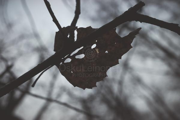 Bog III (Dry Leaf)