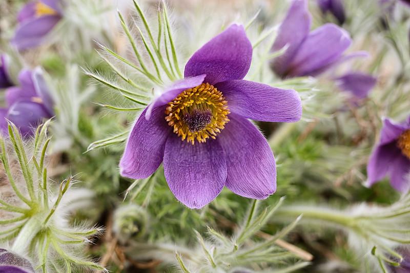 Flower Of Frost II