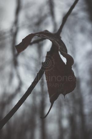 Bog II (Dry Leaf)