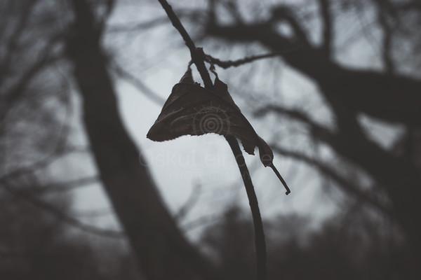 Bog V (Dry Leaf)