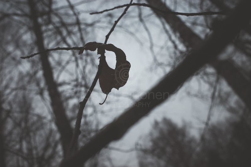 Bog I (Dry Leaf)