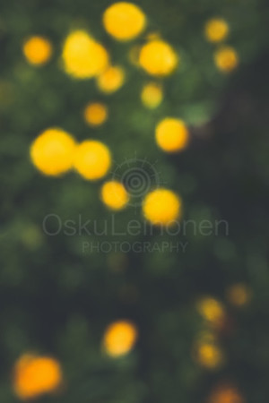 Abstract Flowers XX (Yellow Splashes)