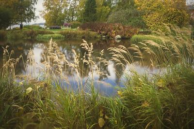 Abundance V (Pond And Grass)