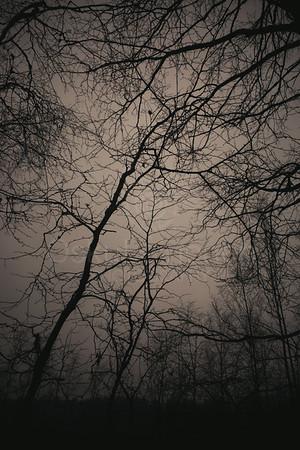 Bog XVII (Trees)