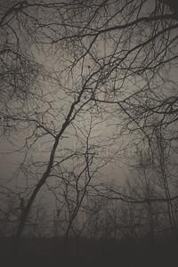 Bog XVIII (Trees)
