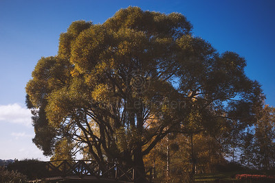 Abundance III (Tree)