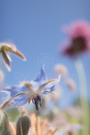 Abstract Flowers XVII (Soft Blue)