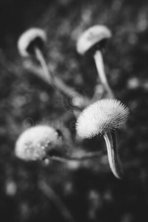 Twelve Bokeh Flowers VI