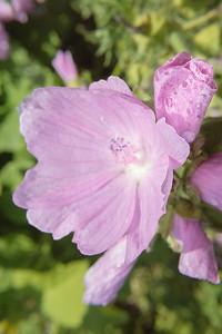 Paper Like Flower II