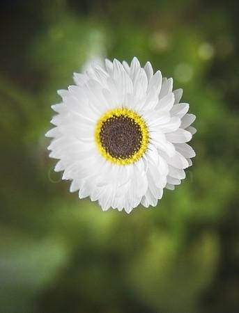 Lovely White Petals