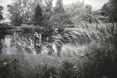 Pond Black And White