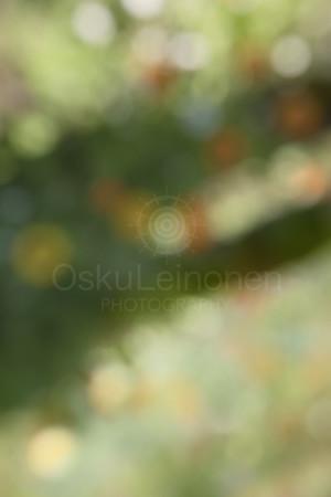 Abstract Flowers IX (Bokeh)