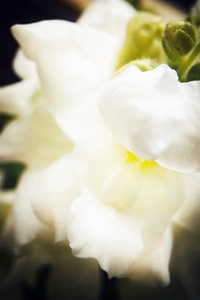 Cream White Flower
