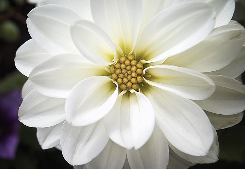 Bright White Flower