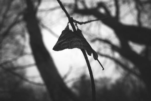 Bog IV (Dry Leaf)