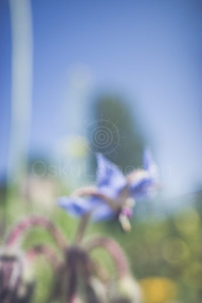 Abstract Flowers VI (Meadow)